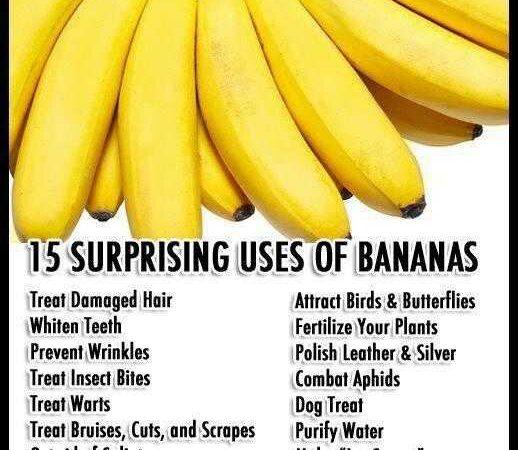 24 fakten ueber bananen die du noch nicht kanntest