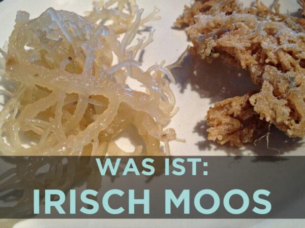 Was ist Irisch Moos - Rezept für Irisch Moos Paste
