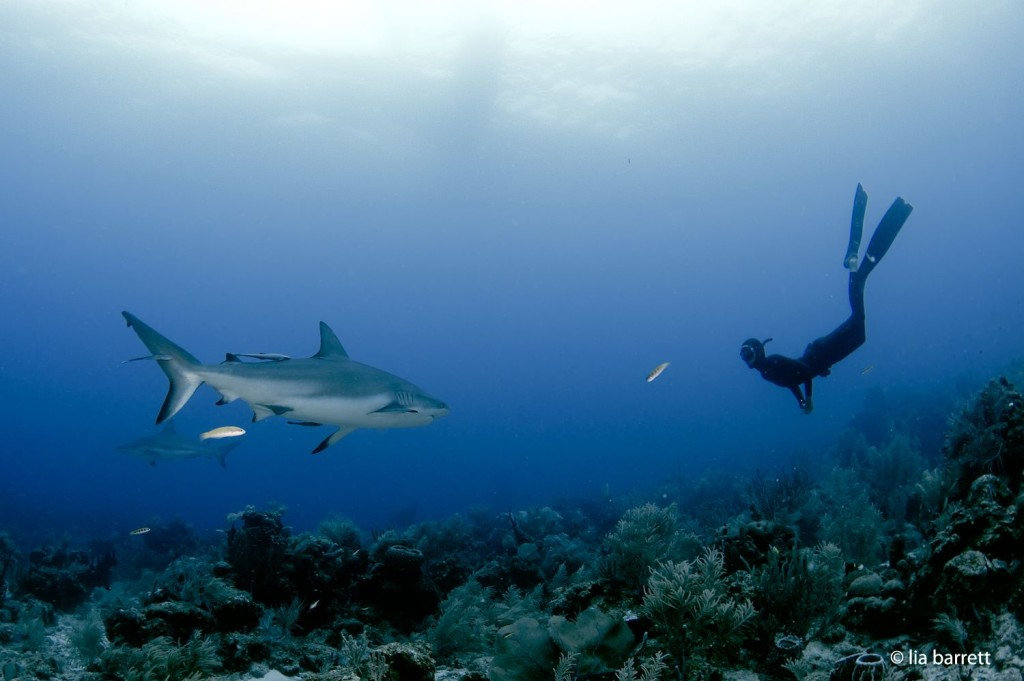 Freitauchen mit Haien in Roatan - Lisa Mattes - Rohtopia - Photo von Lia Barrett